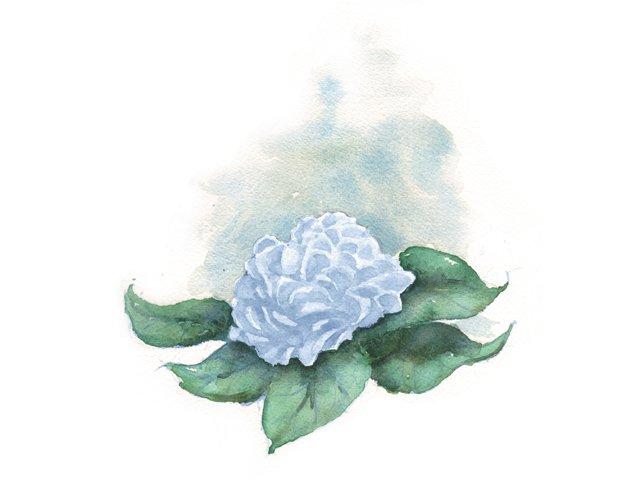 6_bouquets_hydrangea_DOUG_THOPMSON_bp1215.jpg