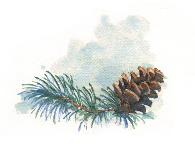 6_bouquets_pinecone_DOUG_THOPMSON_bp1215.jpg