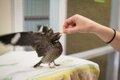 gosouth_wildlifecenter2_CHET_STRANGErp0316.jpg