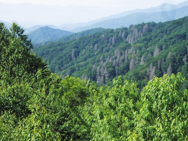 Living_Travel_Smoky_Mountains_National_rp0416.jpg