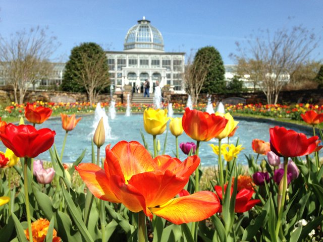 Tulip in front of Conservatory people in backRESIZED.jpg