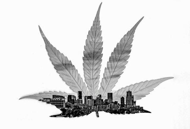 marijuana-ThinkstockPhotos-510212866.jpg