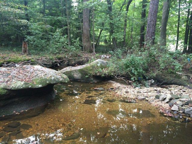 reedy-creek-2_jackie-kruszewski.JPG