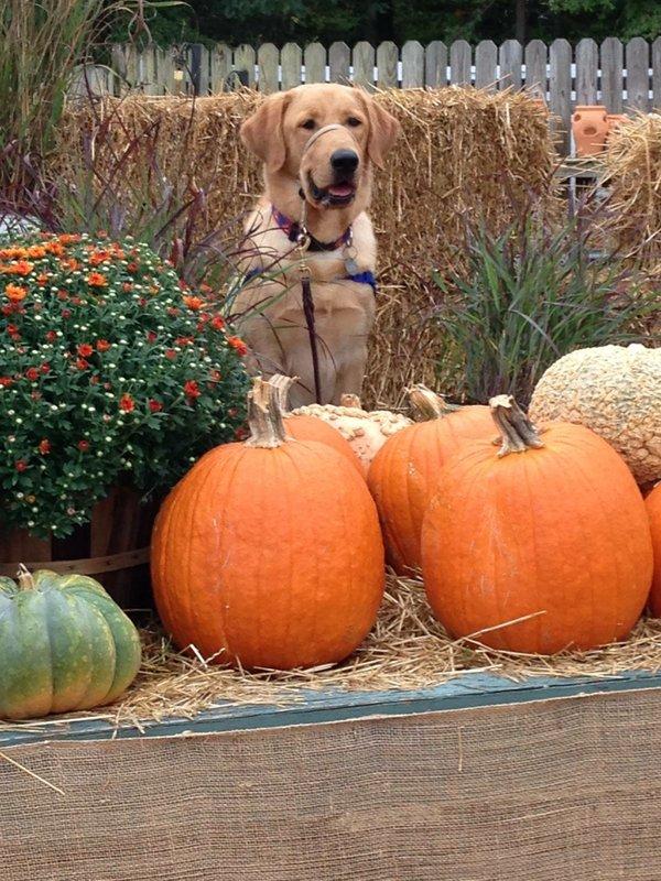 Canine Companions downpage