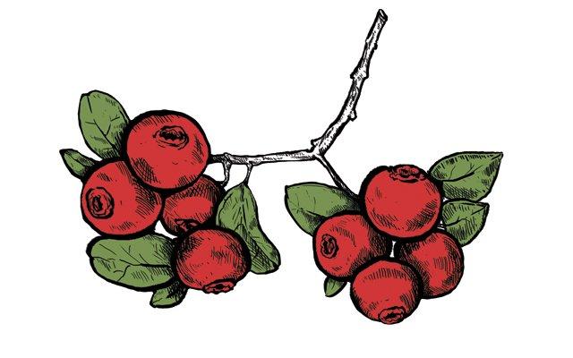 Dining_Shorts_Ingredient_Cranberries_KRISTY_HEILENDAY_rp1216.jpg