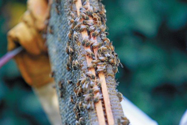 features_beekeeping__MG_4290_hp0317.jpg