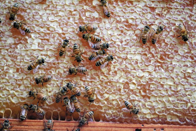 features_beekeeping__MG_4394_hp0317.jpg