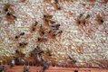 features_beekeeping__MG_4394_hp0317.jpg