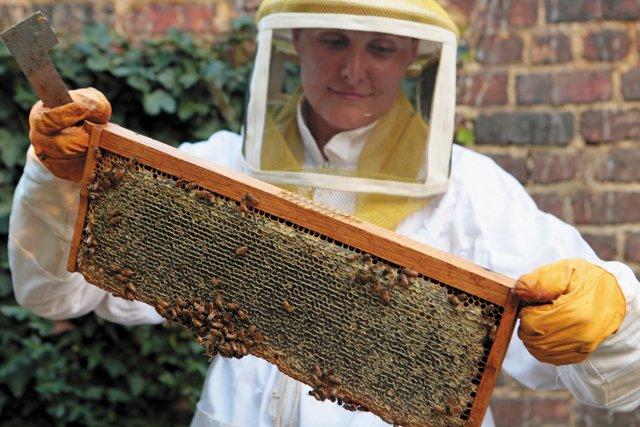 features_beekeeping__N2A9599_hp0317.jpg