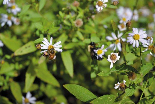 features_beekeeping_DSC_0501_hp0317.jpg