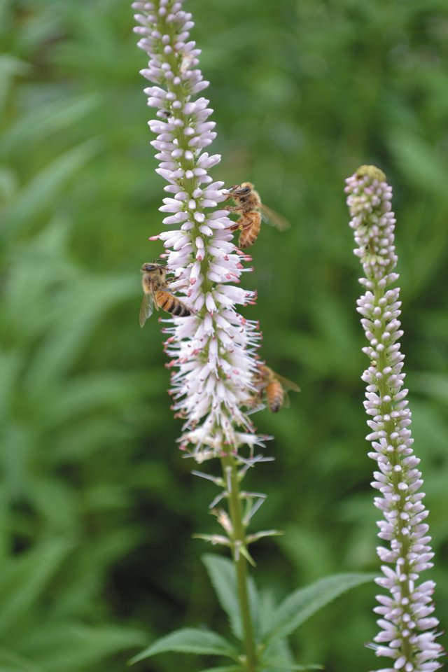 features_beekeeping_DSC_1122_hp0317.jpg