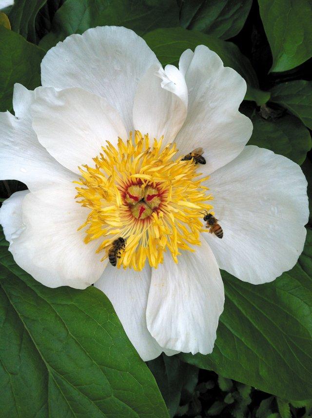features_beekeeping_IMG_2419_hp0317.jpg