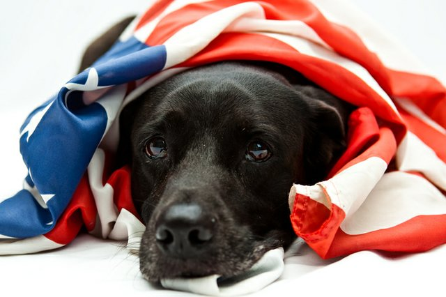 flag-dog_ThinkstockPhotos-104111633.jpg