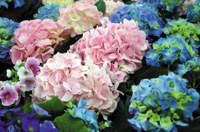 departments_garden_ThinkstockPhotos-517103082_hp0717.jpg