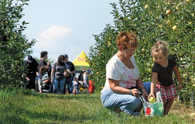 dine_events_Marker_Miller_Orchard_farmers_market_WINCHESTER-FREDERICK_COUNTY_TOURISM_dp1017.jpg