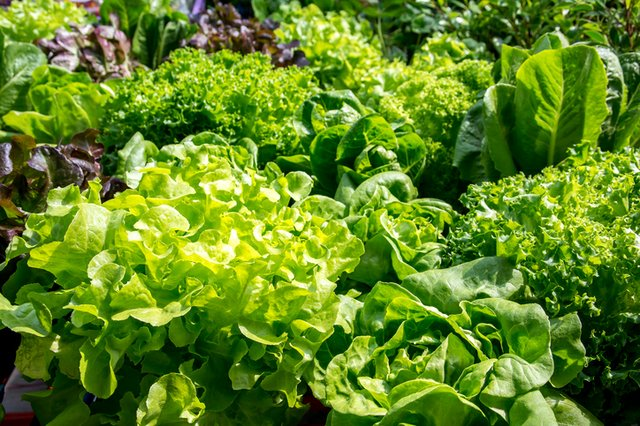 leafy-greens_ThinkstockPhotos-615249160.jpg