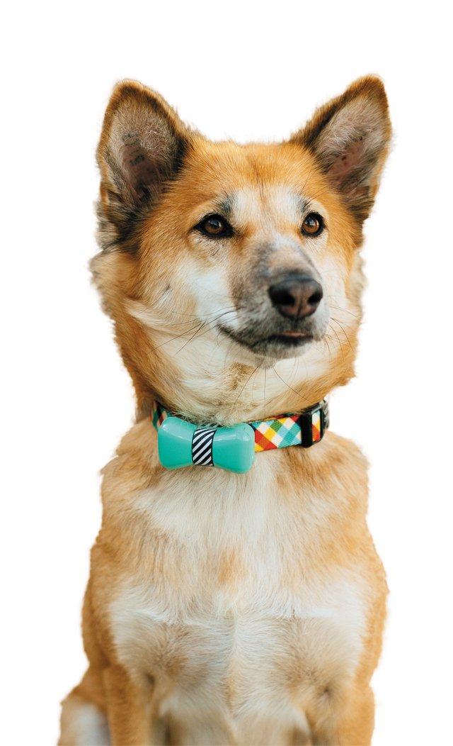 carytown_gift_guide_pets_smart_bowtie_WONDERWOOF_rp1117.jpg