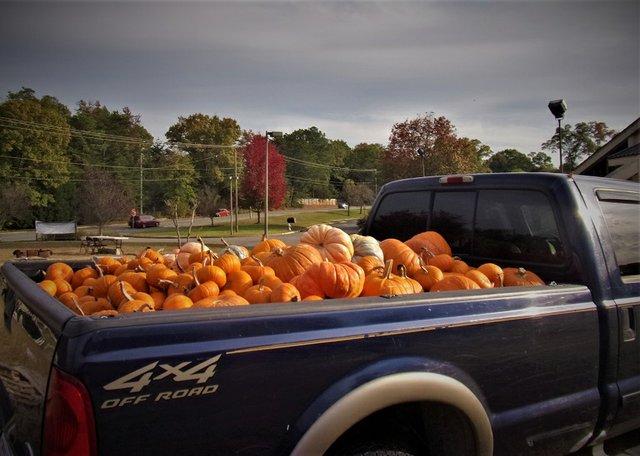pumpkin-recycling_whispers-of-eden.JPG