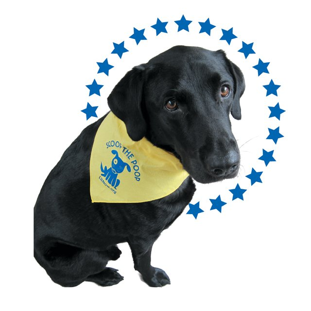 local_northam_dog_murphy_COURETSY_OFFICE_OF_GOVERNOR-ELECT_rp0118.jpg