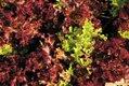 feature_urban_farming_plants_JAY_PAUL_rp0118.jpg