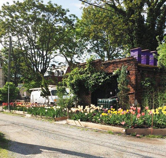 Neighborhoods_Gardens_RickBridgforth_Tulips_courtesyRick_rp0218.jpg