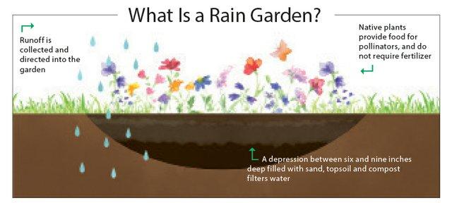 rain-garden.jpg