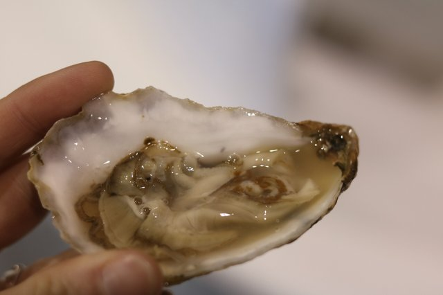 Big Island Oyster 2.jpg