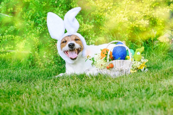 easter-dog_ThinkstockPhotos-935493508.jpg