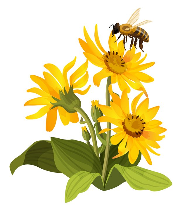 local_pollen_flower.jpg