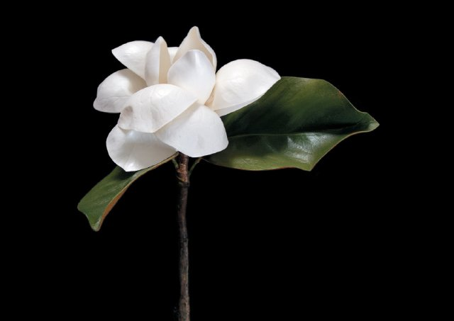 florals-5_dominic-hernandez.jpg