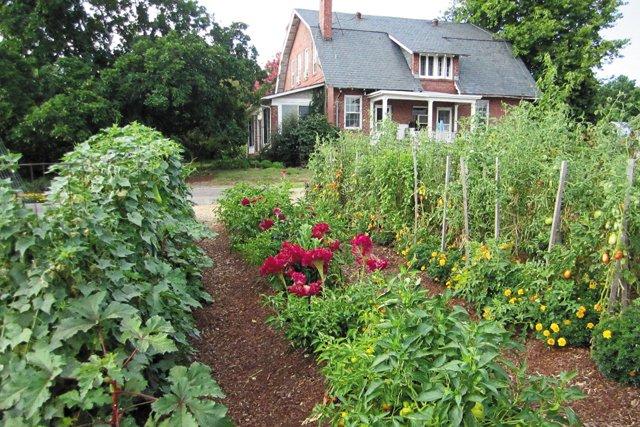 department_garden_Celosia&Pepper-Tomato-&Marigold_hp0318_teaser.jpg