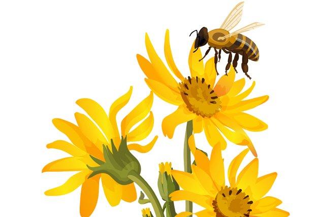 local_pollen_flower_teaser.jpg