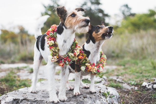 trends_by_the_numbers_dogs_THINKSTOCK_bp0618.jpg