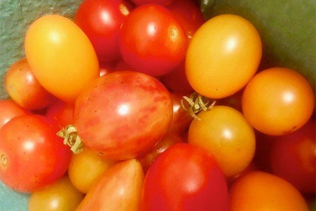 hanover-tomatoes-village-garden_eileen-mellon_teaser.jpg