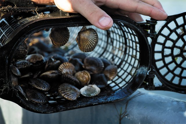 feature_scallops_cage_CHRISTOPHER_ASSAF_rp0818.jpg