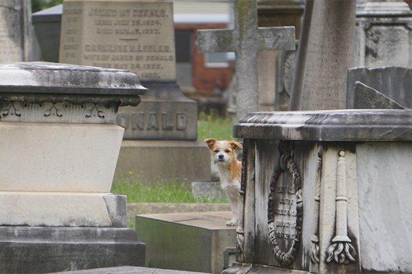 shockoe-hill-cemetery-dog_jay-paul.jpg