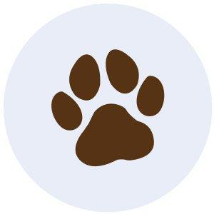 Local_Shorts_Laws_Animals_rp0619.jpg