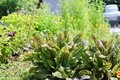 Plants_Scuffletown_EileenMellon.jpg