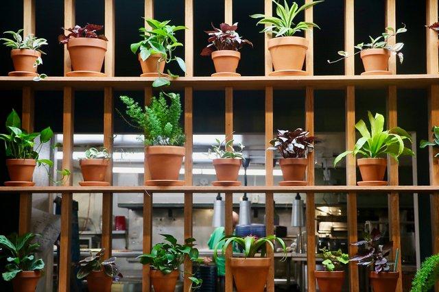 PlantWall_Scuffletown_EileenMellon.jpg