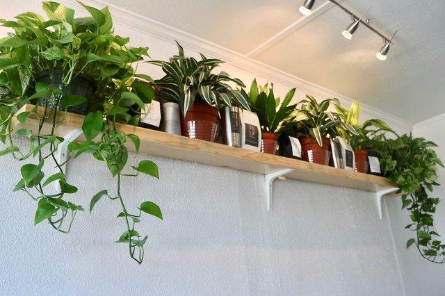 PlantHangings_PulpFiction_EileenMellon.jpg