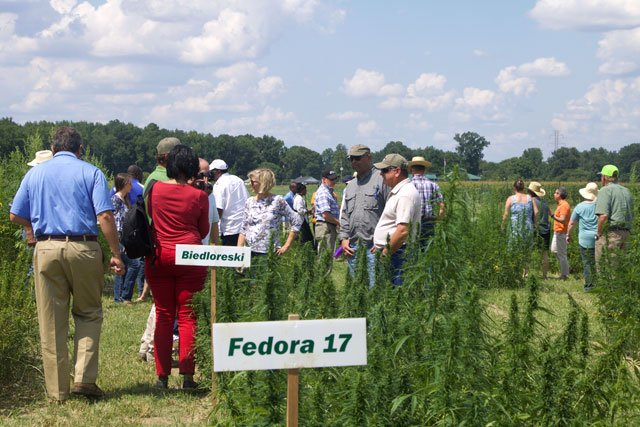 Eat&Drink_Column_Hemp_VSUIndustrialHempFieldDay2_EILEEN_MELLON_rp1119.jpg