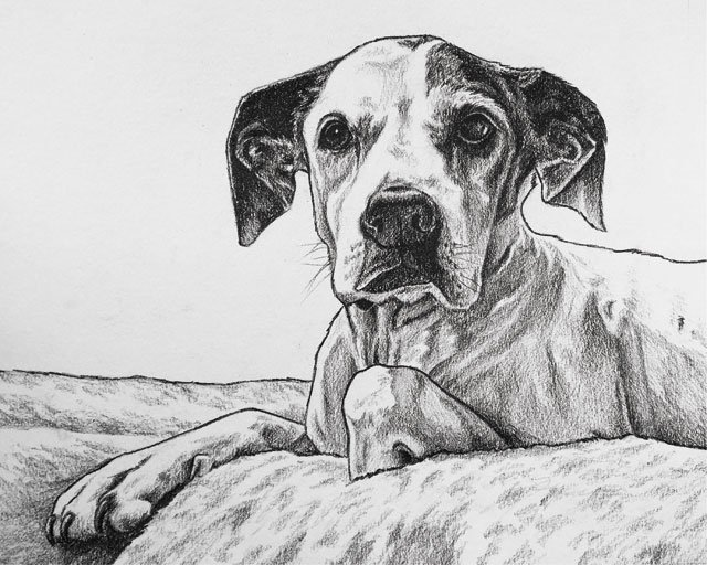 PetGuide_PetPortraits_ShelleyWilliams_COURTESY_rp1219.jpg