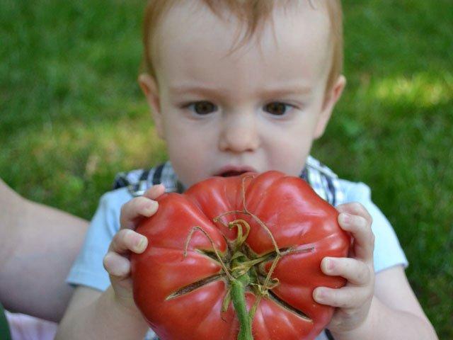 casselmonte-farms-tomato.jpg