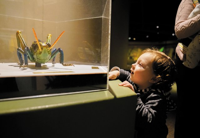A&E_ScienceMuseum_GiantInsects2_Credit.ScienceMuseumofVirginia_rp0520.jpg