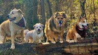 FEA_Fostering_Dogs_COURTESYCARAMARSHALL_rp0520_wide-feature.jpg