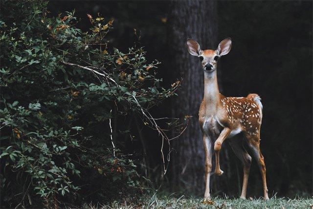 department_garden_deer_plants_SCOTT-CARROLL-UNSPLASH_hp0520.jpg