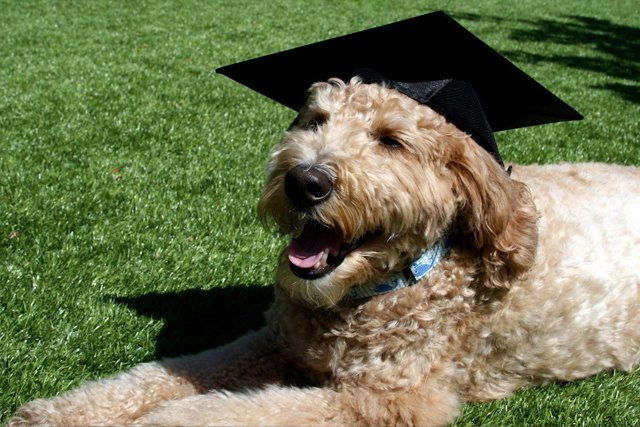 dog-w-mortarboard.jpg