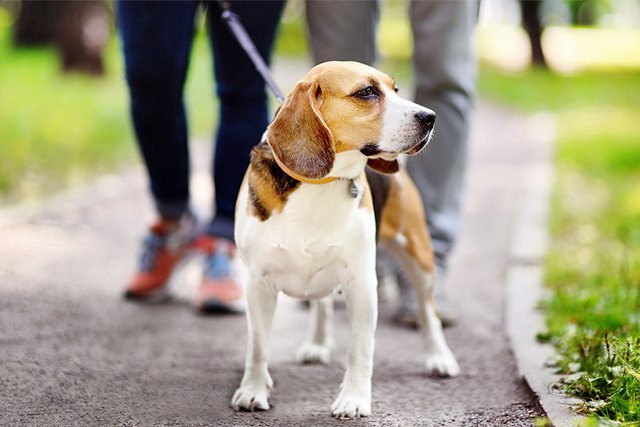 beagle-on-path.jpg