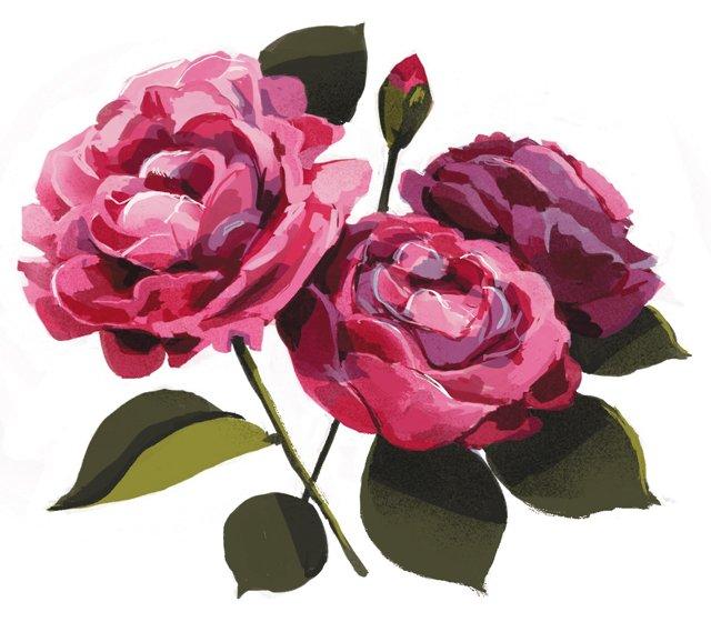 fob_Garden_Rose_CARSONMCNAMARA_hp0720.jpg
