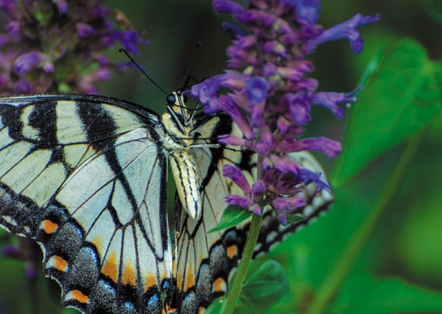 Backpage_PartingShot_Butterfly_JAYPAUL_rp1020.jpg